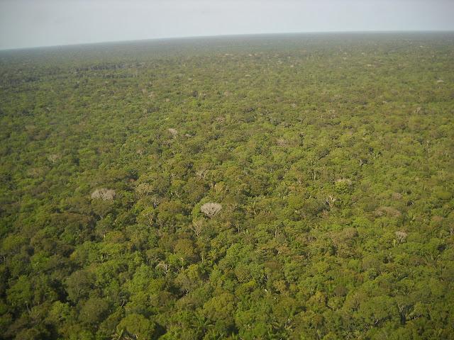 Amazônia - Demarcação de Terras Indígenas Raposa do Sol Pet 3388/RR.