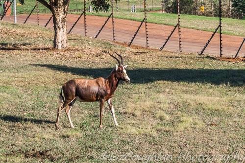 Geriatric Gapper: Amber Ridge, KZN, South Africa