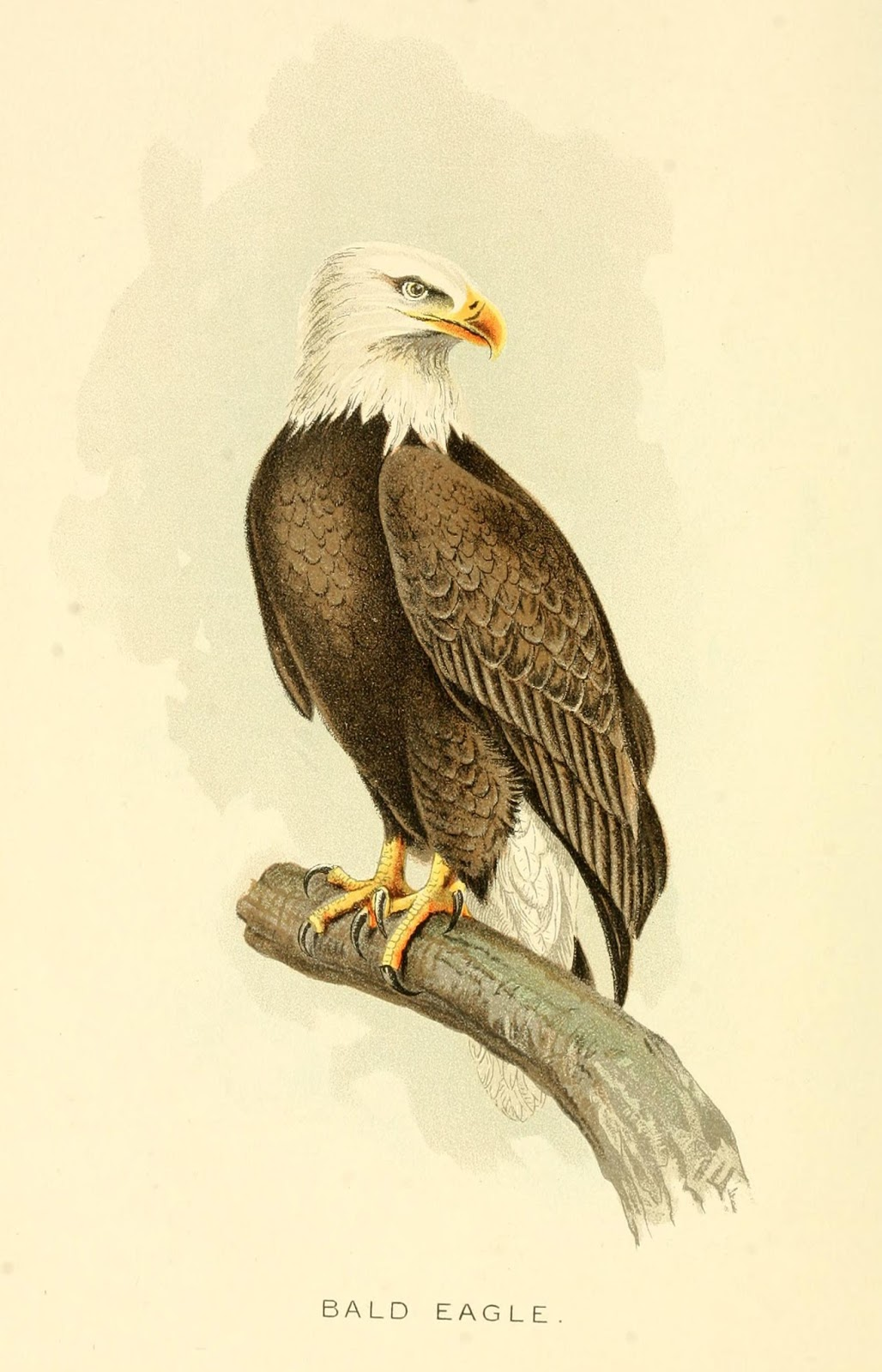 Biodiversity Heritage Library Do Birds And Mammals