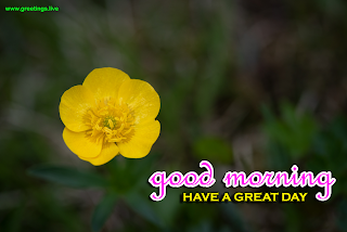 "Daily fresh yellow flowers greetings images "" good morning wishes have a great day """