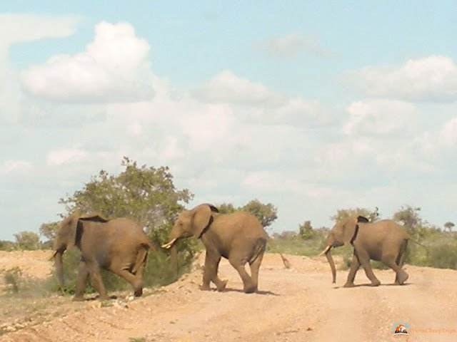 escursioni Kenya, kenya migliori escursioni, escursioni da malindi, safari kenya, tsavo est, safari blu kenya