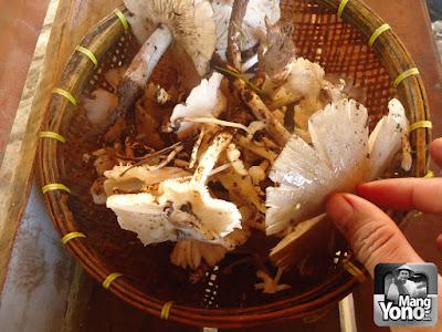 Jamur ini hasil buruan hari ini... Lumayan ya buat lauk sarapan pagi