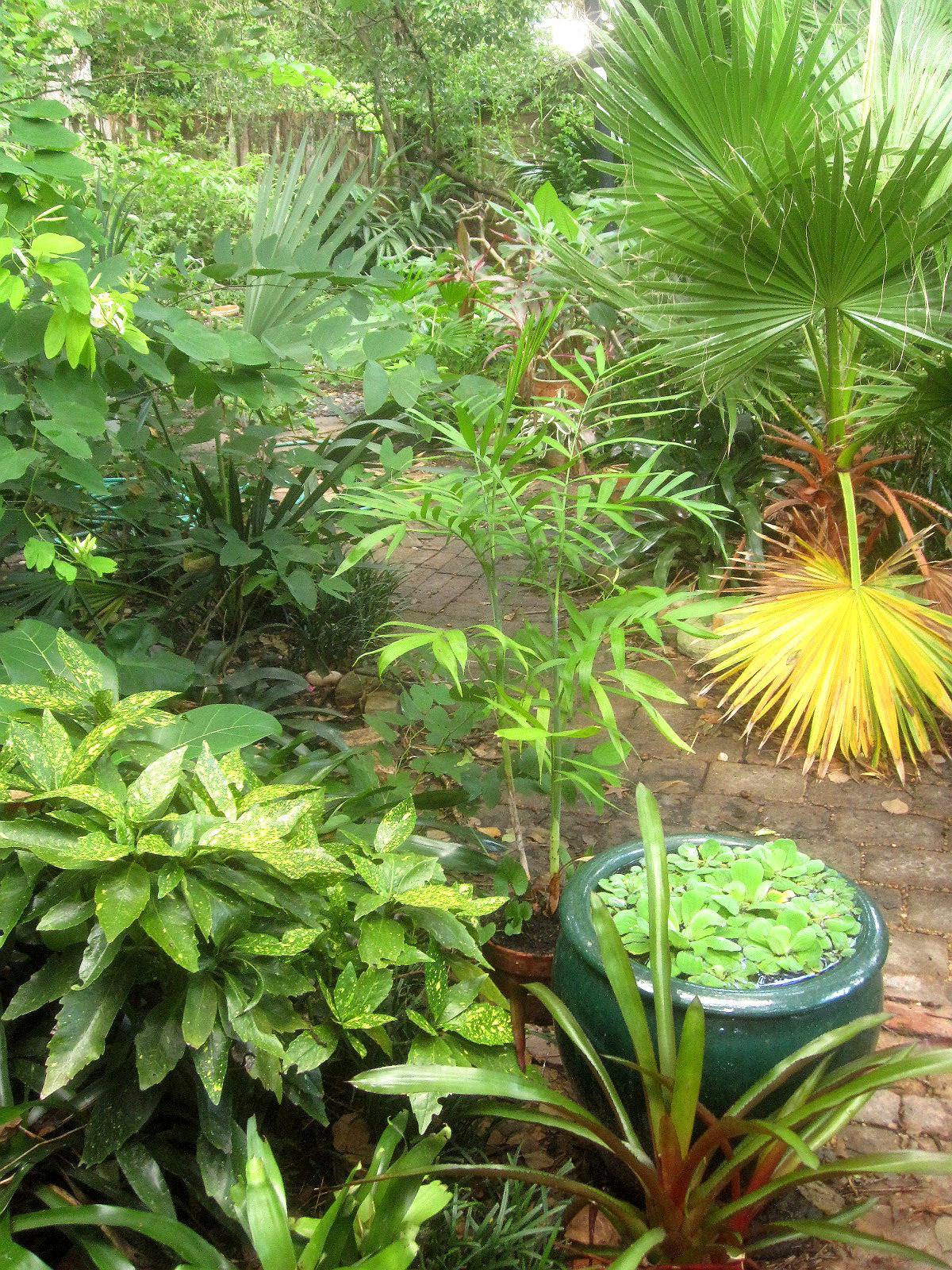 Tropical Texana: GARDEN BOOK REVIEW: THE TROPICAL GARDEN ...