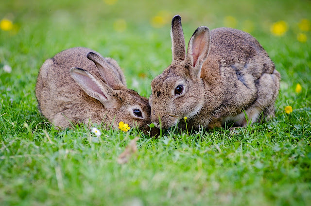 5 Tips To Keep Your Rabbit Safe and Healthy in the Hot Summer Months