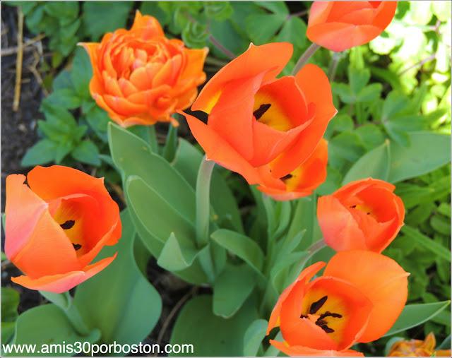 La Primavera en Boston