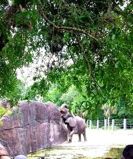 Elephant, Florida
