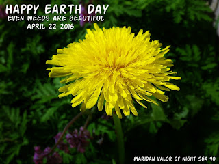 Random art; Happy Earth Day April 22 2016. Even weeds are beautiful.