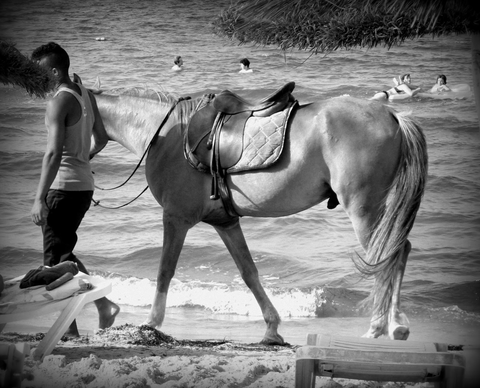 horse, beach, tunisia