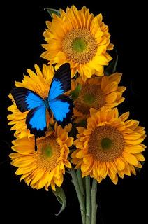 fotos-de-flores-grandes-jarrones