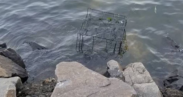 Dog Spots Cage Half-Submerged In Water, Hears Whimpering & Leaps In To Save A Life