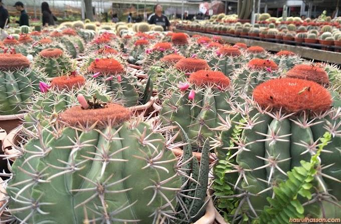 Tips Tanam & Jaga Kaktus Untuk Hiasan Dalaman