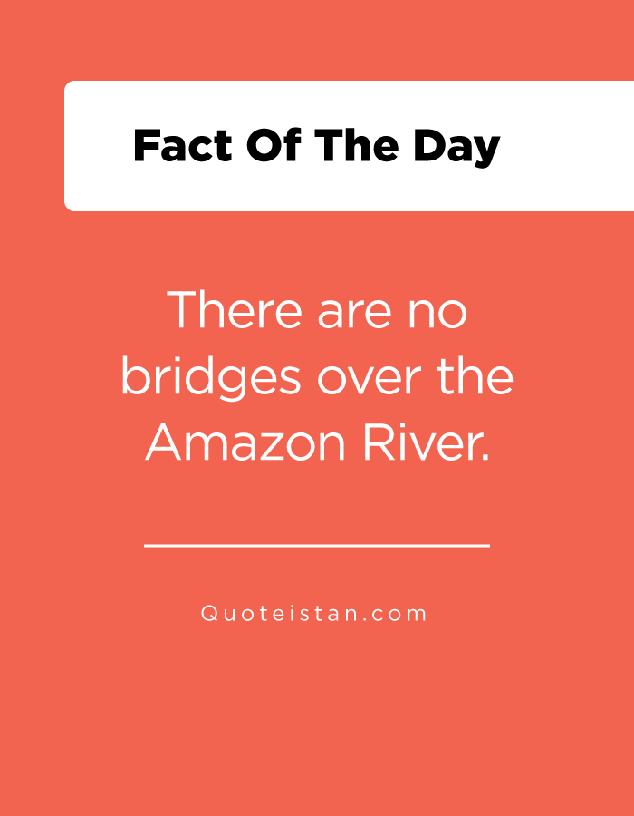 There are no bridges over the Amazon River.