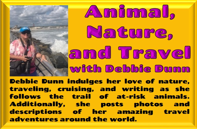 Animal, Nature, and Travel