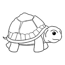 Small Turtle Coloring Pages