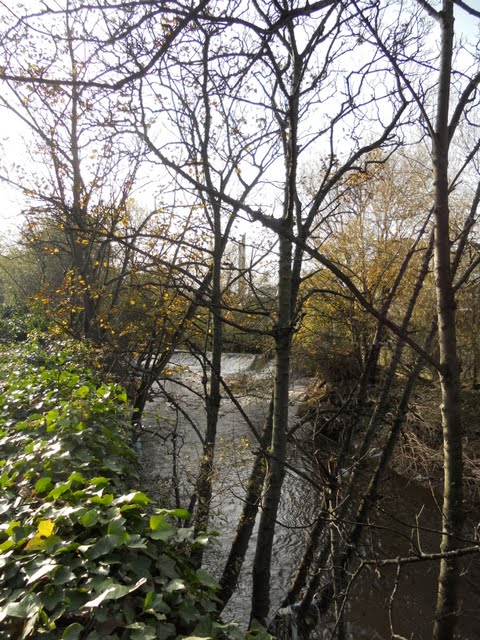 Walk the River Dodder in Dublin