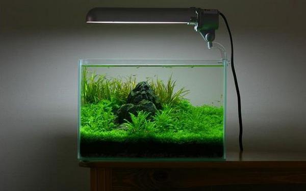 Cara Membuat Aquascape Minimalis Untuk Pemula Mag Fish