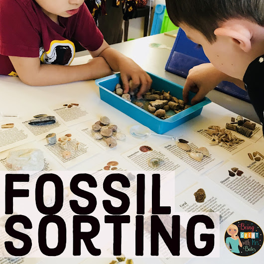 Fossil Sorting Activity Kit