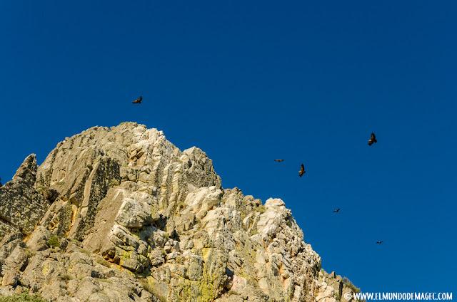 Salto del Gitano en Monfragüe, famoso por sus colonias de buitres