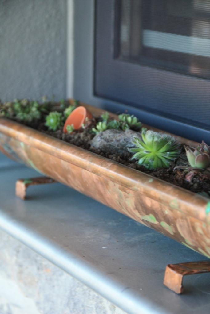 teacup in the garden eine regenrinne f r sukkulenten. Black Bedroom Furniture Sets. Home Design Ideas