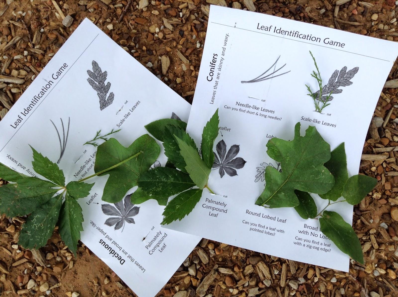 Outdoorsmom Tree Identification Nature Walk For Preschoolers Free