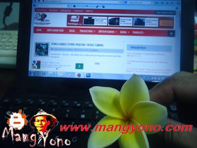 Khasiat dan manfaat dari bunga kamboja