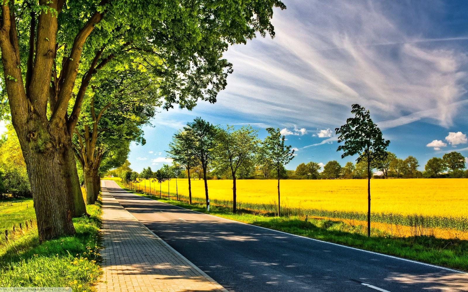 Weg met bomen in de zomer