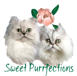 Education, Learning, and Enjoyment of Persian Cats