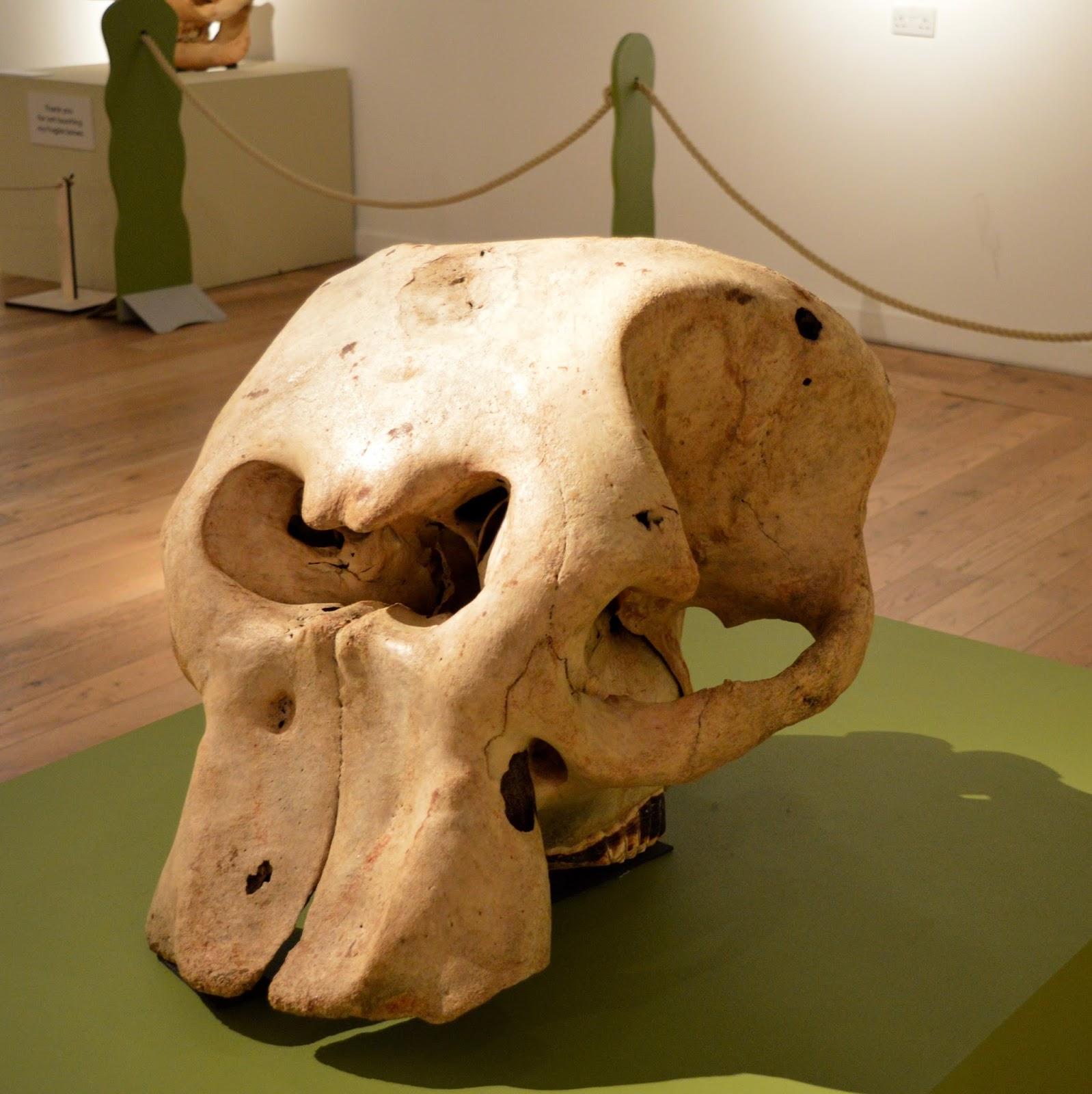 Bones Exhibition at Hancock Museum, Newcastle