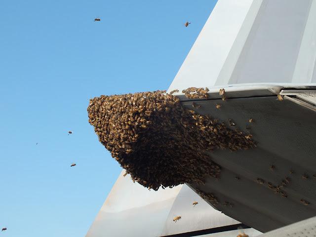 Пчелы атаковали американского стервятника F-22 !