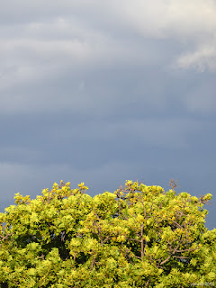 grey cloud, bright tree
