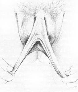 Жіночі статеві органи фото 6