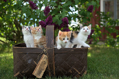 Jari Hytönen - Cats in a Basket, via Unsplash