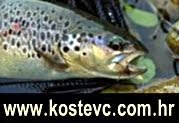 Kostevc Fishing Shop