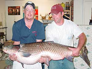 Big Fishes of the World: GRASS CARP (Ctenopharyngodon idella)