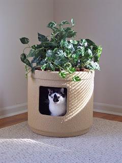แบบบ้านคนรักแมว