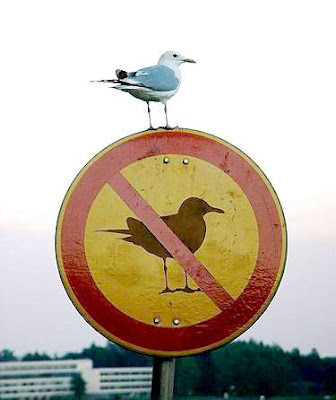 No birds sign