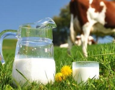 pengertian susu dan kandungan susu