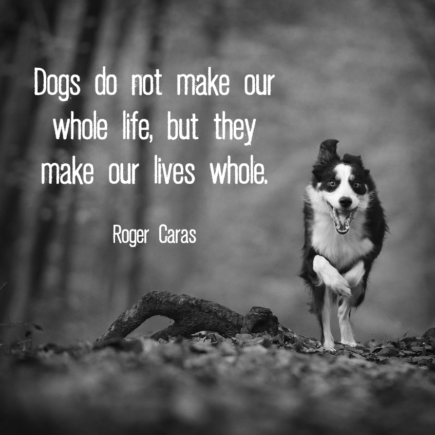 "Running dog with quote ""Dogs do not make our whole life, but the make our lives whole."" - Roger Caras"