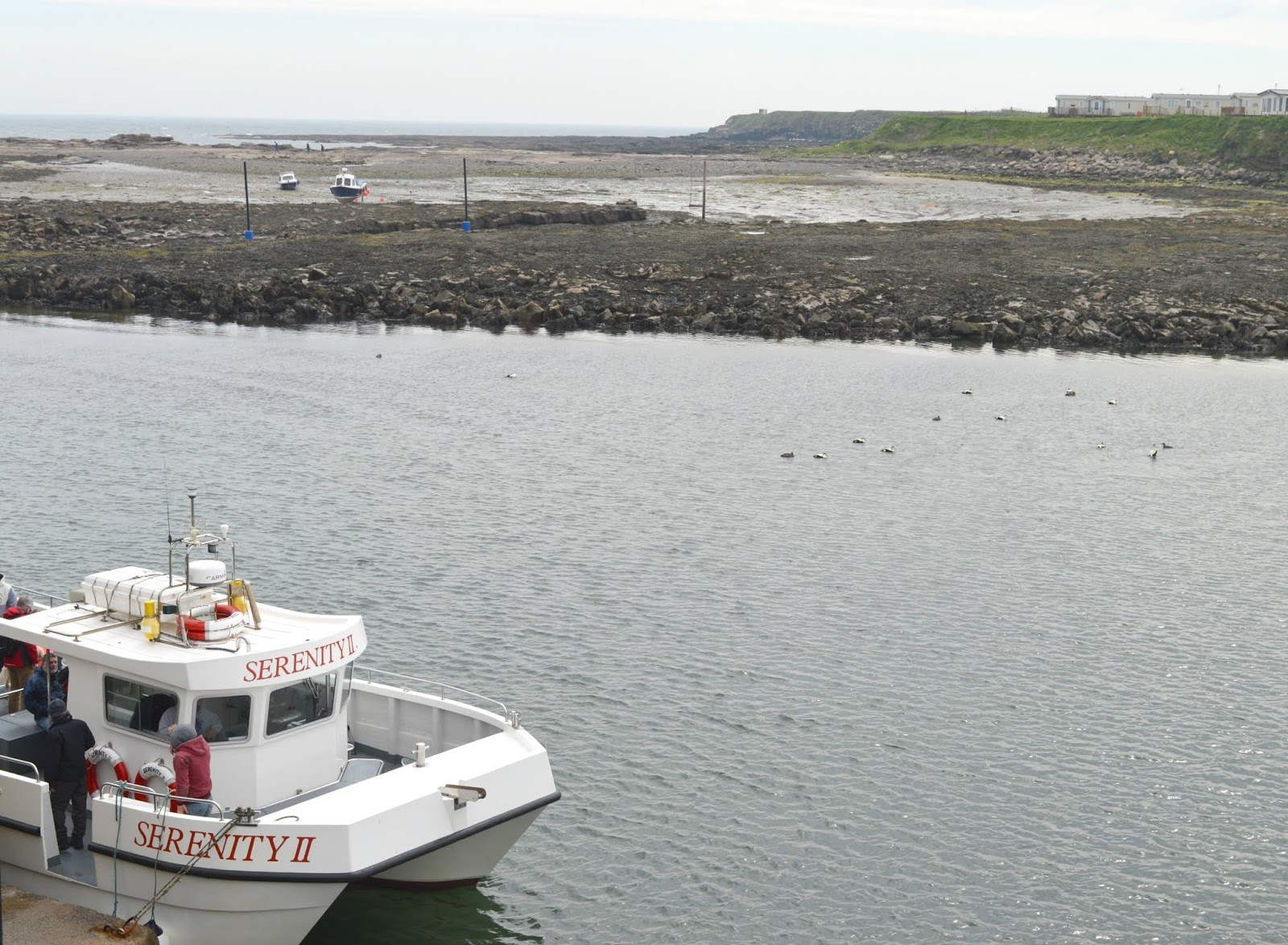 Farne Islands with Serenity Boat Tours
