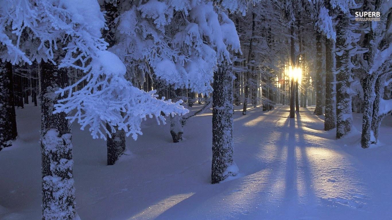 Das Leben Ist Bunt Winternacht