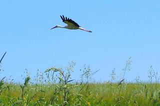 Fakta Menarik tentang Burung Bangau yang Perlu Anda Ketahui