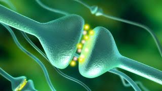 Sinapsis artificiales