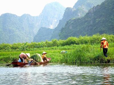 Rice Paddies, Hanoi, Vietnam