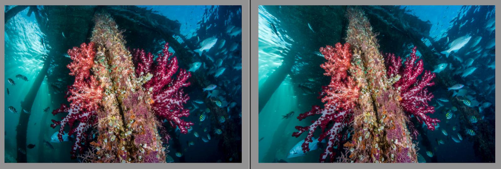 Correcting Lens Distortion in Underwater Photos