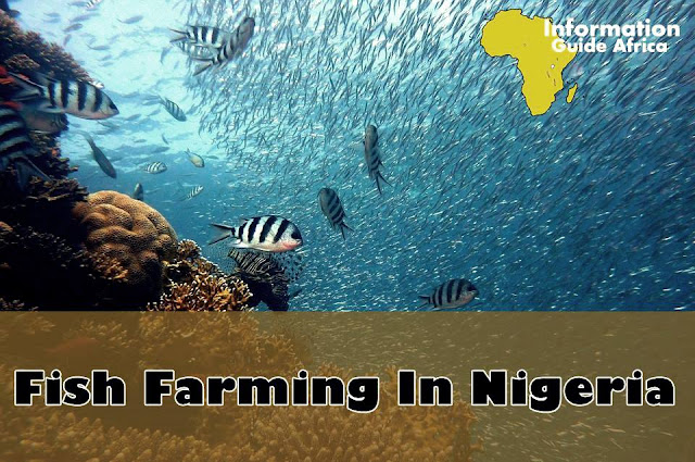 How To Start Small Scale Fish Farming In Nigeria