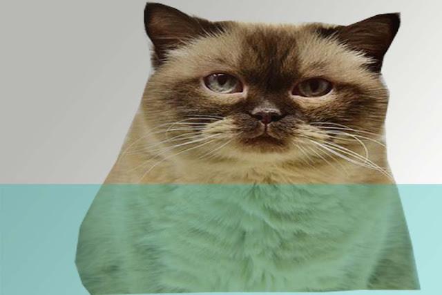 b ahaya-mengajak-kucing-tidur-notes-asher