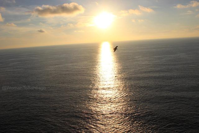 foto de puesta de sol con gaviota