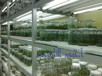زراعة الأنسجة النباتية - صور التكاثر اللاجنسى