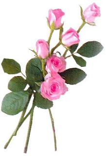 Resultado de imagem para botões de rosas