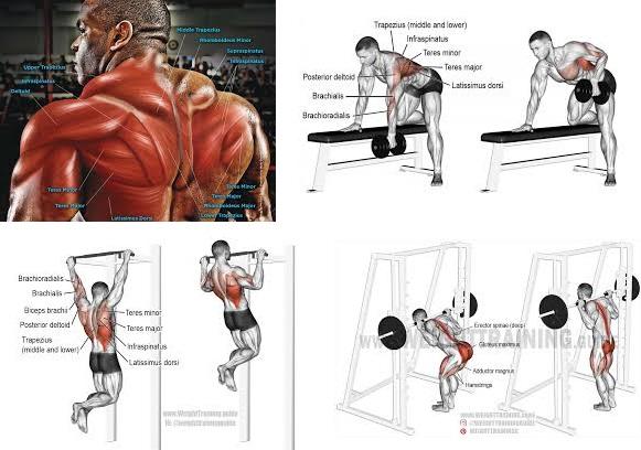 Best Movement Killer Back Workouts For Mass